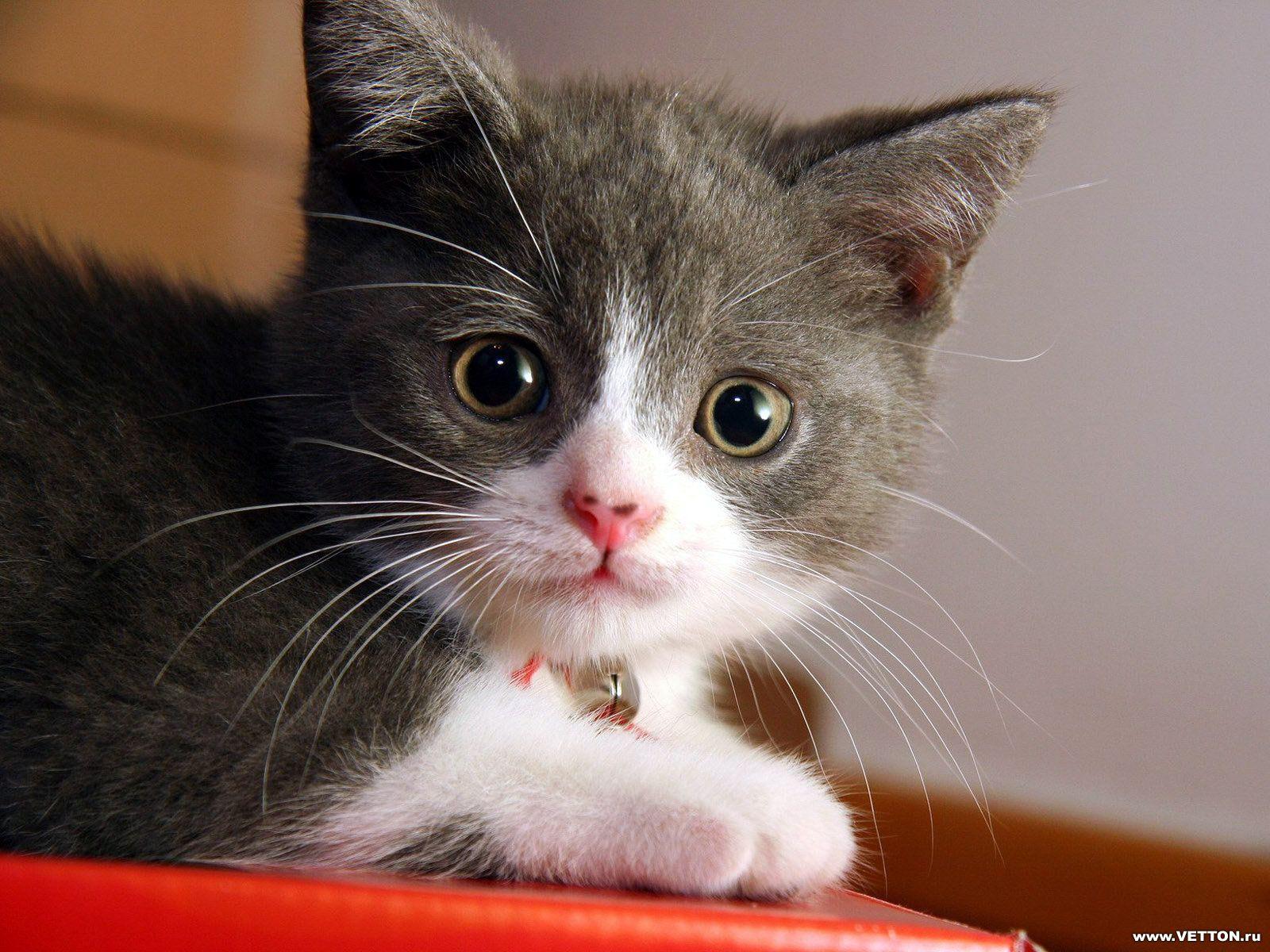 Фото котенка, скачать бесплатно фото котенка.: http://www.textopics.ru/name-images-727.php