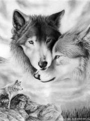 Волки на фото скачать фото волков